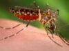 Hati-hati!! Ini Bahaya Obat Nyamuk Bakar Bagi Kesehatan
